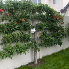 Prachtige bomen in de tuin