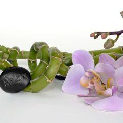 Online orchidee kopen, wel zo makkelijk