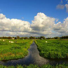 Een huis kopen in de polder