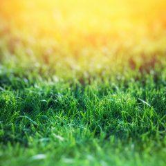 In 4 stappen je gras herstellen naar een mooi gazon