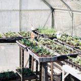 Broeikassen: de optimale plek voor je planten