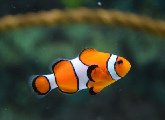 De gids voor een gezonde vis